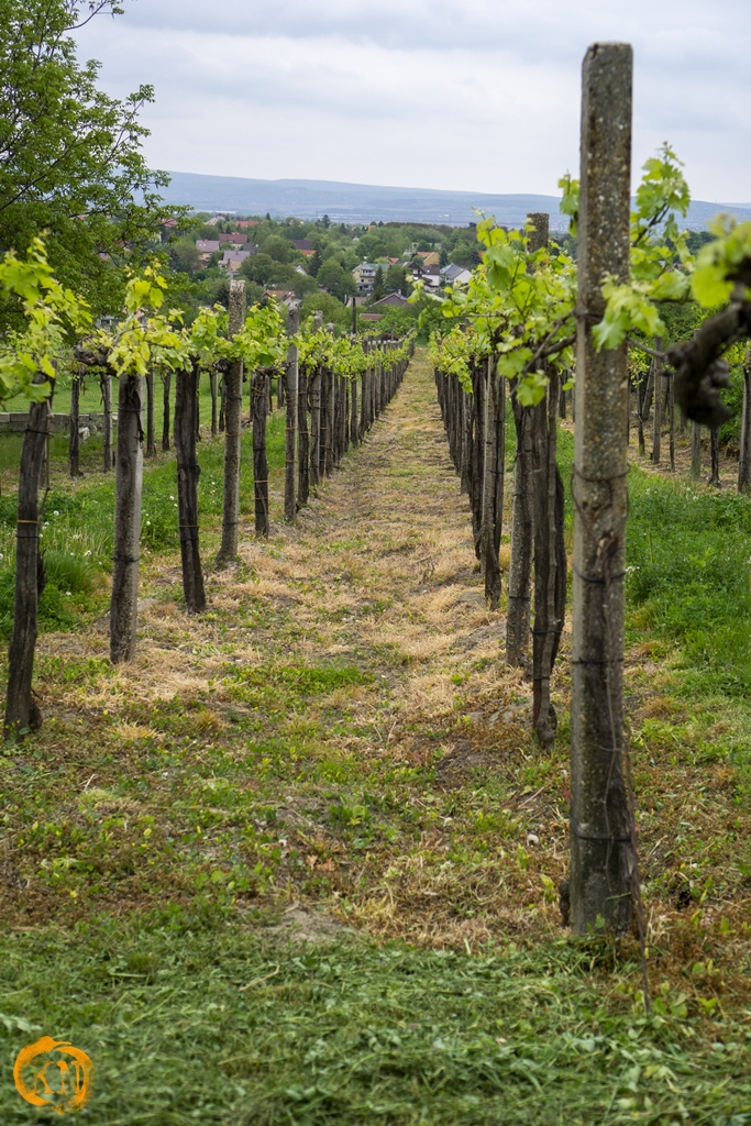 Etyek wine region - a hidden gem of Hungary
