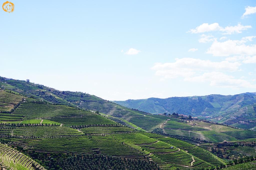 Douro - stolica wina Porto - co zobaczyć?